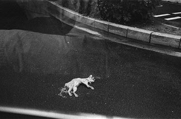 Picture of A Dead Cat, Shenzhen 2011 死貓 2011, 深圳
