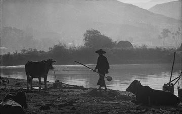 Picture of Plowing, Yuen Long, 1962
